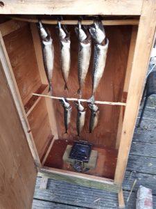 Makrelen in de rookkast