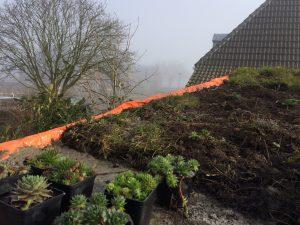 Groen dak in aanleg